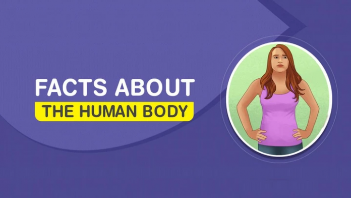 Your body smell tells your age :10 most interesting facts about The Human Body